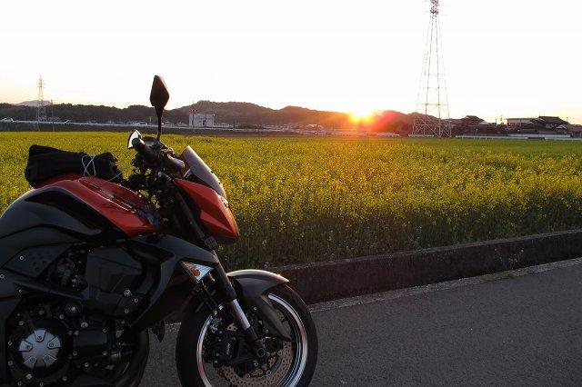 夕陽と菜の花.jpg