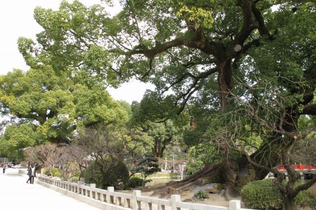 巨木も多い.jpg
