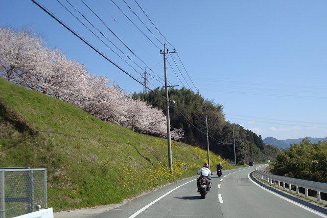 桜満開!.jpg
